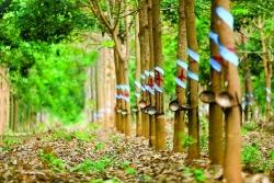 Vươn ra biển lớn, THACO sẽ xây dựng chuỗi giá trị nông nghiệp khép kín