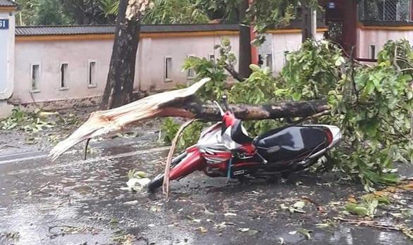 Huế: Bão số 5 khiến một người tử vong vì bị cây đổ đè