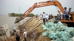 Cà Mau: Triều cường gây sạt lở nghiêm trọng toàn tuyến đê biển Tây