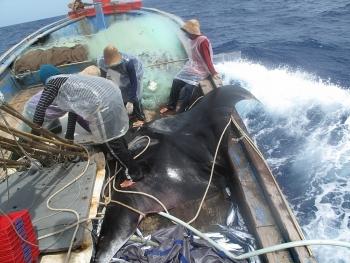 500 giờ cùng ngư dân trên biển (bài 4): Đại chiến thủy quái đại dương