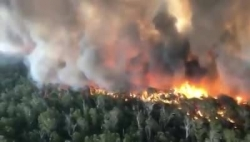 Video: Cận cảnh vụ cháy rừng thiêu sống nửa tỷ động vật ở Australia