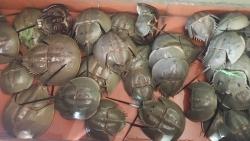 Quảng Ninh: 5 người ngộ độc vì ăn liên hoan so biển