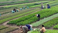 Tiếp tục chính sách miễn thuế sử dụng đất nông nghiệp, cải thiện kinh tế nông thôn
