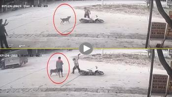Thanh niên đi xe máy bất ngờ bị chó tấn công giữa đường