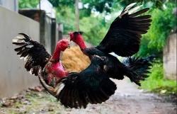 Nam thanh niên bị bắt nhốt, đánh đập suốt đêm vì nghi trộm 4 con gà