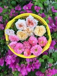 voi chi phi 30 trieu ong bo tre tao khu vuon trong rau nuoi ca ly tuong tren san thuong o tp hcm