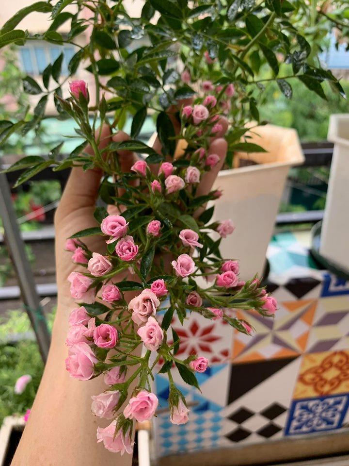 ban cong it nang van thom huong hoa hong trong ngoi nha pho cua me hai con o quan 11 tp hcm