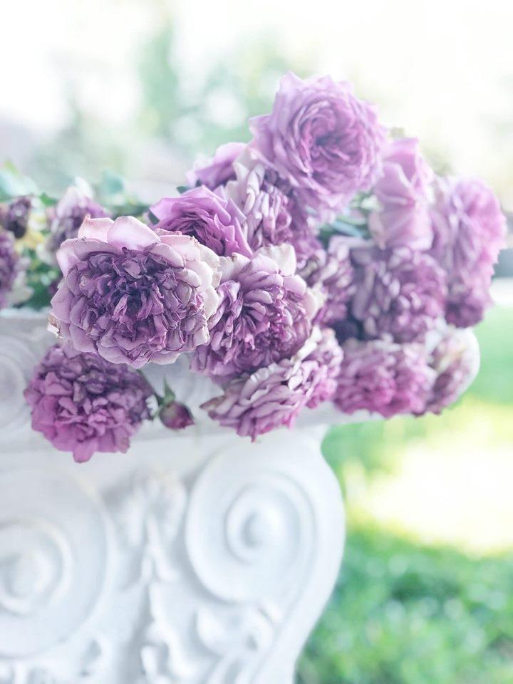 Người phụ nữ Việt ở Mỹ sống an yên trong ngôi nhà vườn có thảm hoa rực rỡ