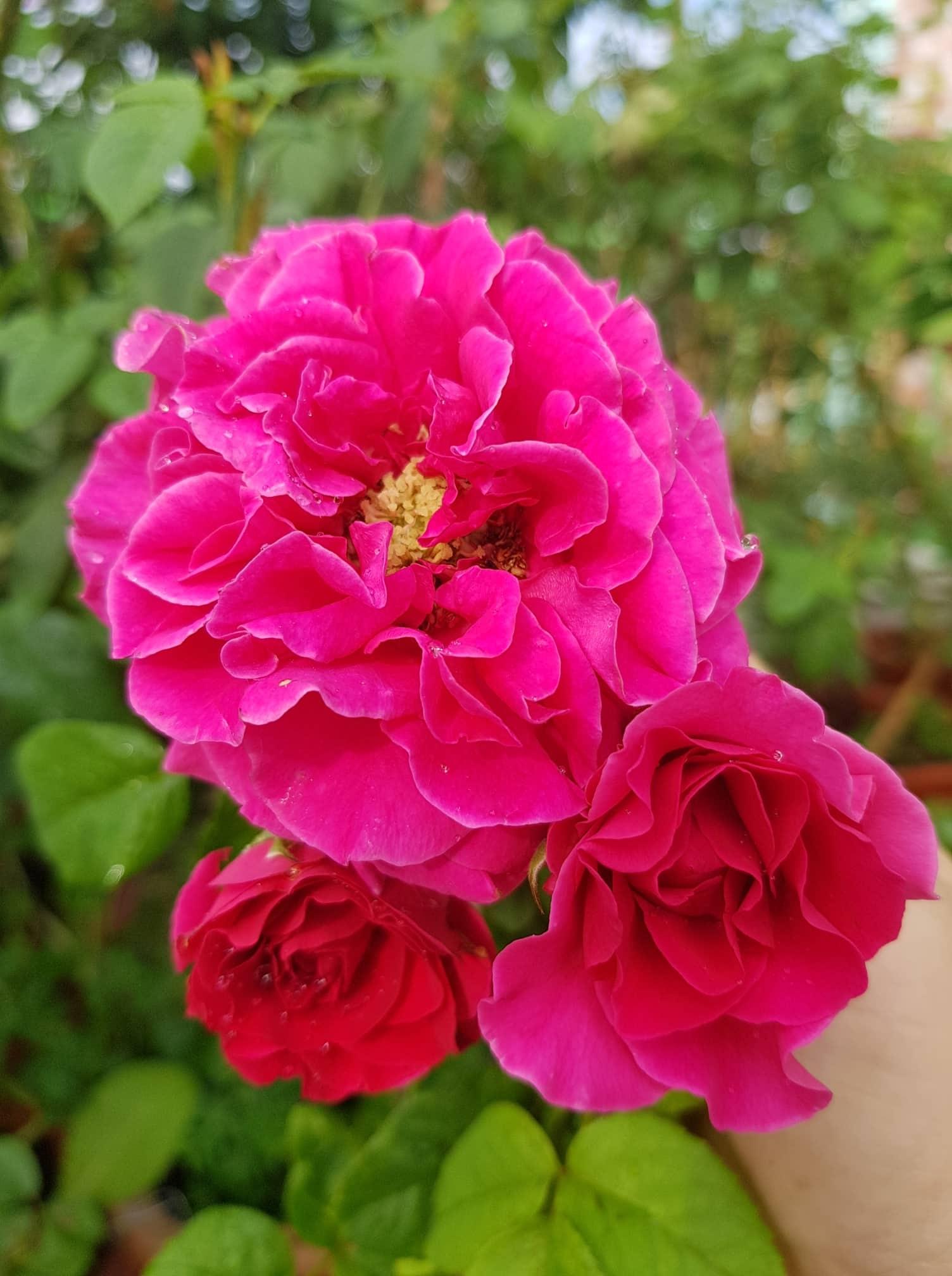 rau qua va hoa tuoi tot xanh um tren san thuong 100m2 o tp hcm