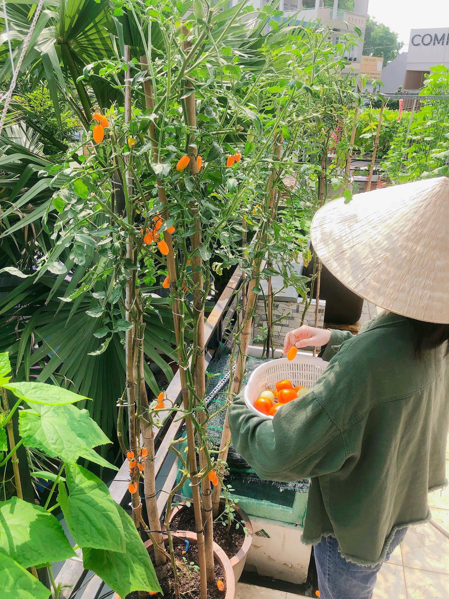 me nau an va trong rau co gai phu kin du loai rau qua sach tren san thuong rong 30m2 o binh duong
