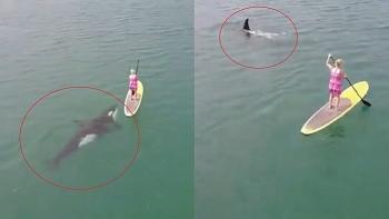 Video: Thú vị cảnh bầy cá voi sát thủ bơi ngay dưới người chèo ván