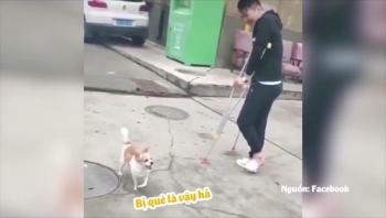 """Video: Chó """"lầy lội"""" cố tình"""
