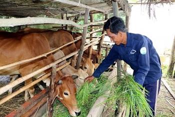 UNDP hoan nghênh Việt Nam đã kịp thời công bố số liệu thống kê về nghèo đa chiều trong đại dịch COVID-19