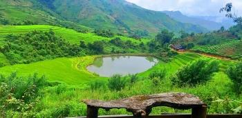 """Sin Suối Hồ (Lai Châu): Từ """"bản nghiện"""" vươn lên thoát nghèo nhờ làm du lịch, trồng địa lan, thảo quả"""