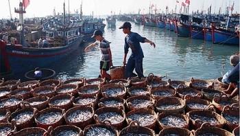 Phát triển mạng lưới đô thị biển - một hướng đi mới của kinh tế biển nước ta