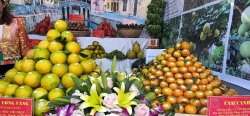 Hòa Bình: Công bố nhãn hiệu tập thể sản phẩm cam, bưởi Mường Động