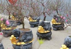muon kieu cay bonsai hinh chuot doc dao don tet nguyen dan canh ty 2020