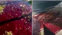 Video: Sau trận động đất, mặt đường bất ngờ bị nhuộm đỏ ở Thổ Nhĩ Kỳ