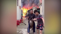 video can canh xuong moc o long bien chay du doi