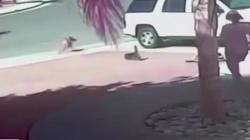 Video: Khó tin cảnh mèo đuổi đánh chó giải cứu cậu chủ