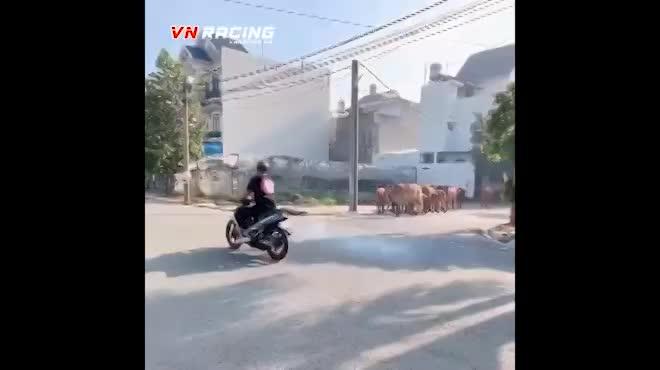 video quai xe net po xe may bi dan bo hon chuc con truy duoi