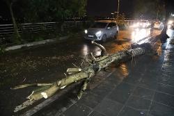 Tin bão số 2 mới nhất: Nghệ An-Hà Tĩnh mưa rất to, Hà Nội cây đổ đè trúng người