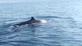 Clip: Cận cảnh cá voi