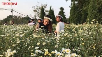 video do xo den nhung vuon hoa cuc hoa mi lon nhat ha noi