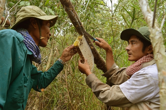 nghe gac keo ong o ca mau duoc cong nhan di san van hoa phi vat the