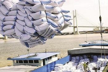 Gạo xuất khẩu tăng giá, lập đỉnh mới sau gần 10 năm