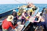Đưa ngư dân Việt đi khai thác thủy sản trái phép bị phạt tới 100 triệu đồng