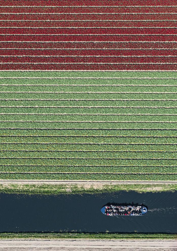 chong mat khi ngam nhung buc anh canh dong hoa tulip o ha lan