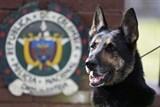 """Chú chó Sombra - """"Khắc tinh"""" của băng đảng ma túy Urabenos"""