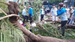 Sau vụ cây đổ làm chết học sinh, Sở GD&ĐT TP.HCM ra thông báo khẩn