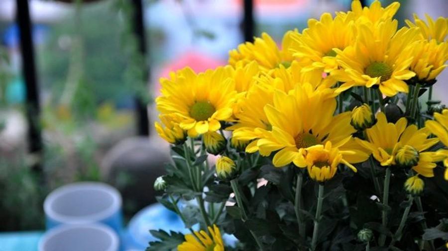 sai lam can tranh khi cam hoa tren ban tho ngay tet