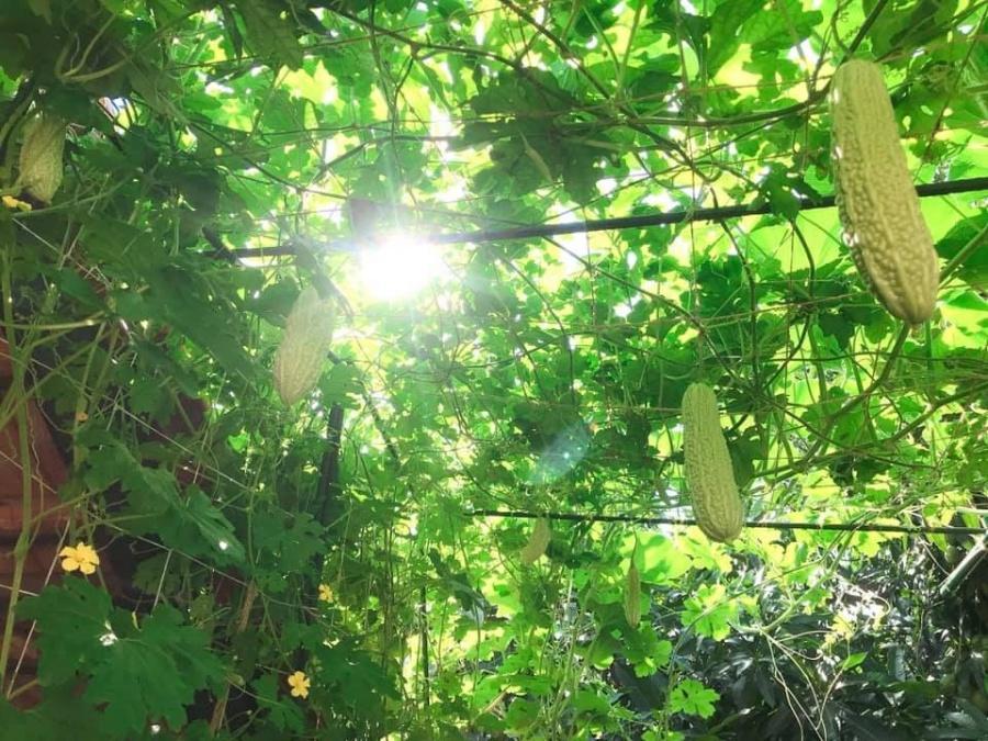 Kinh nghiệm trồng rau trên sân thượng
