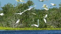 9 khu dự trữ sinh quyển của Việt Nam được UNESCO công nhận