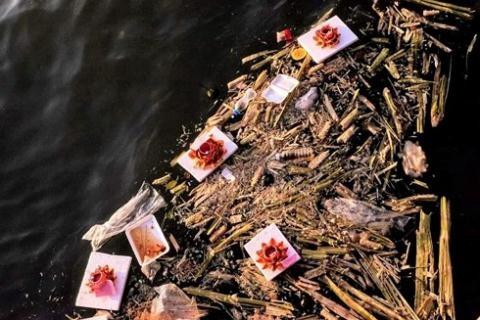 30000 den hoa dang duoc vot len va phoi ban gia re