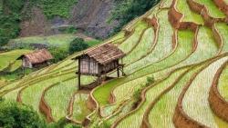 Ruộng bậc thang Mù Cang Chải đẹp hùng vĩ dưới ống kính du khách nước ngoài