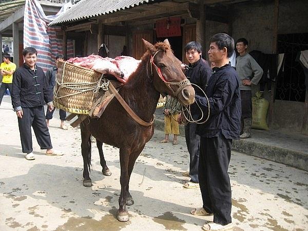 Ngựa thồ lễ vật giao cho nhà gái (Ảnh: Nguyễn Ngọc Thanh).