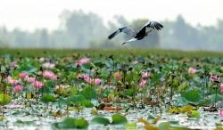 chim yen la bieu trung cua tinh nao
