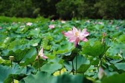 pu luong net dep dung di hoa quyen voi may troi