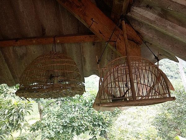 la ma hay dung chim chao mao dau dan du chim rung ve hot quanh nha