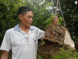 den dat binh lieu lac trong sac do trang phuc phu nu dao