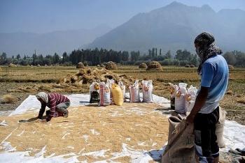 Việt Nam nhập gạo từ Ấn Độ để làm gì?