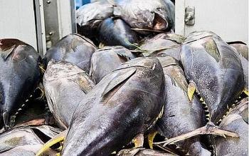 Xuất khẩu cá ngừ tăng mạnh 50%