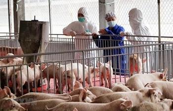 Việt Nam sẽ ngừng nhập khẩu lợn sống từ Thái Lan