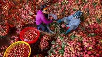 Trung Quốc sẽ tạo điều kiện để vải thiều được thông quan thuận lợi