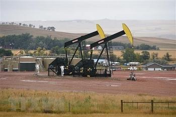 Nhận định giá xăng dầu tuần tới (31/8-6/9): Nhu cầu về dầu vẫn trong vùng suy giảm
