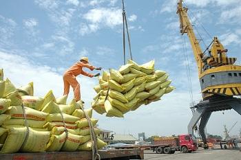 Lô gạo thơm Việt nam đầu tiên xuất khẩu sang EU theo EVFTA